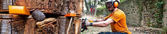 Abattage d'arbres Cannes