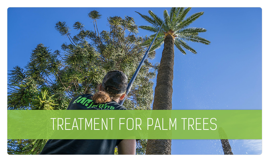 Treatment for palm trees in Cannes