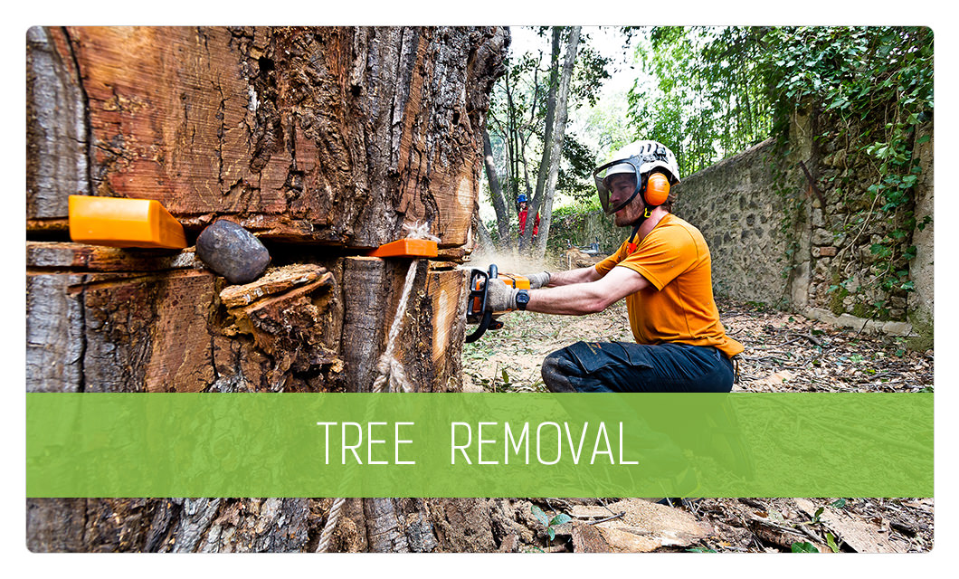 Tree removal in Cannes