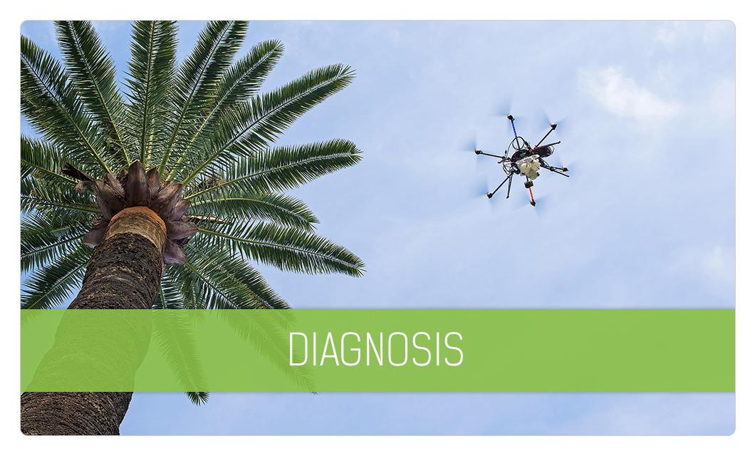 Garden Diagnosis in Cannes