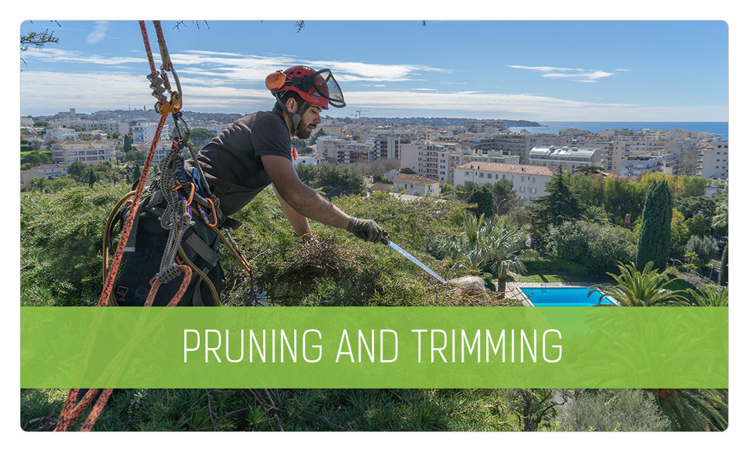 Pruning and trimming in Cannes