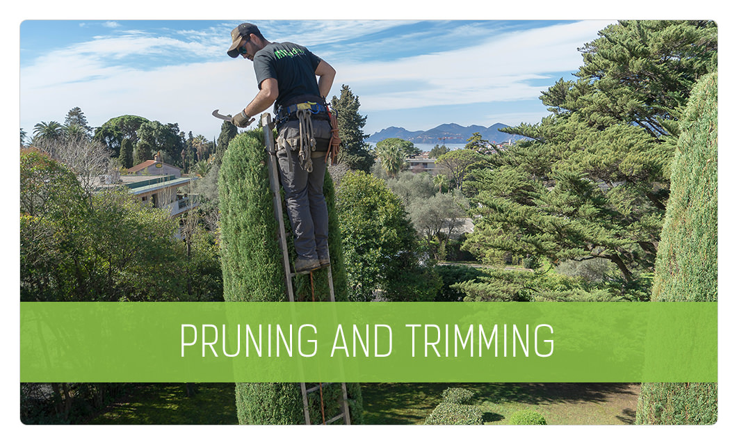 Tree pruning and trimming in Cannes