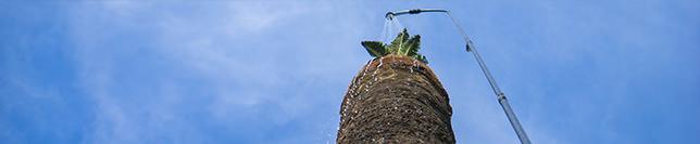 Entretien traitement palmier Cannes